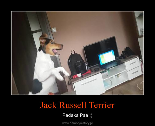 Jack Russell Terrier – Padaka Psa :)