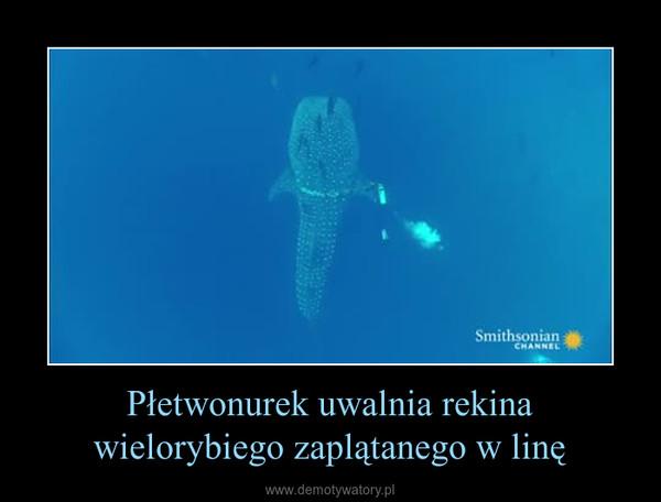 Płetwonurek uwalnia rekina wielorybiego zaplątanego w linę –