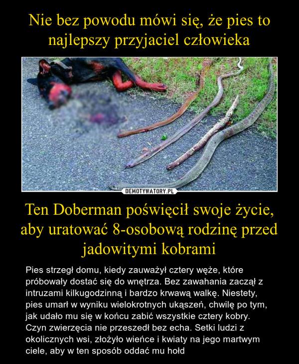 Ten Doberman poświęcił swoje życie, aby uratować 8-osobową rodzinę przed jadowitymi kobrami – Pies strzegł domu, kiedy zauważył cztery węże, które próbowały dostać się do wnętrza. Bez zawahania zaczął z intruzami kilkugodzinną i bardzo krwawą walkę. Niestety, pies umarł w wyniku wielokrotnych ukąszeń, chwilę po tym, jak udało mu się w końcu zabić wszystkie cztery kobry. Czyn zwierzęcia nie przeszedł bez echa. Setki ludzi z okolicznych wsi, złożyło wieńce i kwiaty na jego martwym ciele, aby w ten sposób oddać mu hołd