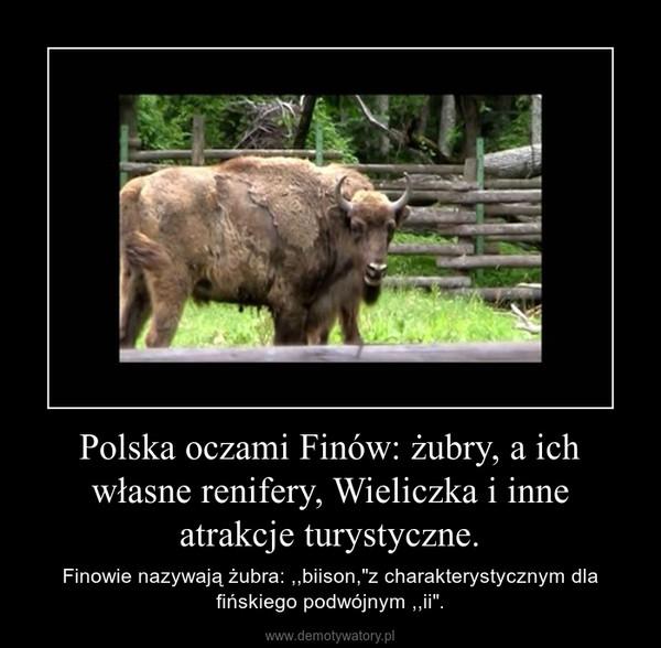"""Polska oczami Finów: żubry, a ich własne renifery, Wieliczka i inne atrakcje turystyczne. – Finowie nazywają żubra: ,,biison,""""z charakterystycznym dla fińskiego podwójnym ,,ii""""."""
