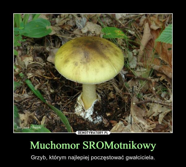 Muchomor SROMotnikowy – Grzyb, którym najlepiej poczęstować gwałciciela.