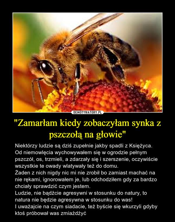 """""""Zamarłam kiedy zobaczyłam synka z pszczołą na głowie"""" – Niektórzy ludzie są dziś zupełnie jakby spadli z Księżyca. Od niemowlęcia wychowywałem się w ogrodzie pełnym pszczół, os, trzmieli, a zdarzały się i szerszenie, oczywiście wszystkie te owady wlatywały też do domu. Żaden z nich nigdy nic mi nie zrobił bo zamiast machać na nie rękami, ignorowałem je, lub odchodziłem gdy za bardzo chciały sprawdzić czym jestem. Ludzie, nie bądźcie agresywni w stosunku do natury, to natura nie będzie agresywna w stosunku do was!I uważajcie na czym siadacie, też byście się wkurzyli gdyby ktoś próbował was zmiażdżyć"""