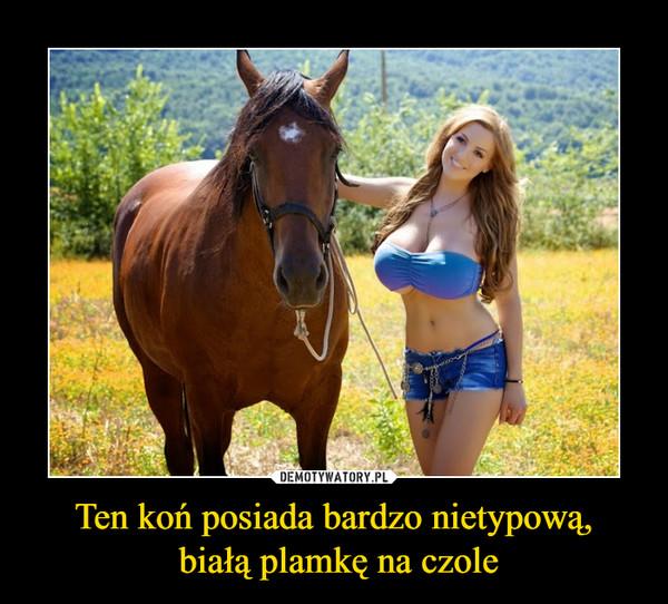 Ten koń posiada bardzo nietypową, białą plamkę na czole –