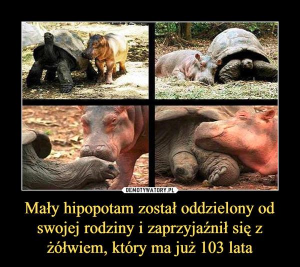 Mały hipopotam został oddzielony od swojej rodziny i zaprzyjaźnił się z żółwiem, który ma już 103 lata –
