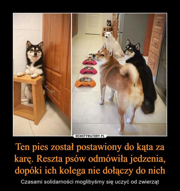 Ten pies został postawiony do kąta za karę. Reszta psów odmówiła jedzenia, dopóki ich kolega nie dołączy do nich