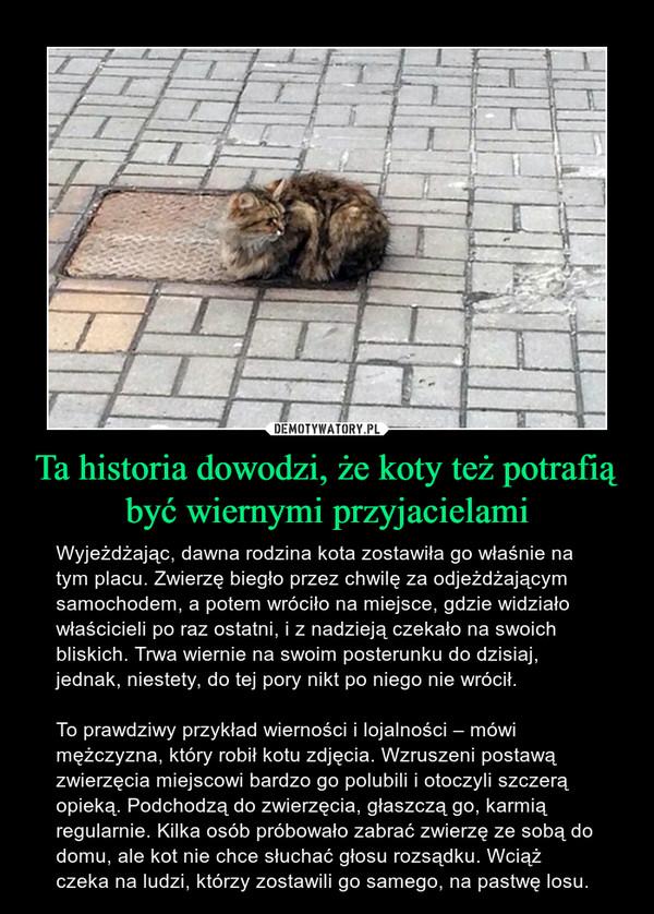 Ta historia dowodzi, że koty też potrafią być wiernymi przyjacielami – Wyjeżdżając, dawna rodzina kota zostawiła go właśnie na tym placu. Zwierzę biegło przez chwilę za odjeżdżającym samochodem, a potem wróciło na miejsce, gdzie widziało właścicieli po raz ostatni, i z nadzieją czekało na swoich bliskich. Trwa wiernie na swoim posterunku do dzisiaj, jednak, niestety, do tej pory nikt po niego nie wrócił.To prawdziwy przykład wierności i lojalności – mówi mężczyzna, który robił kotu zdjęcia. Wzruszeni postawą zwierzęcia miejscowi bardzo go polubili i otoczyli szczerą opieką. Podchodzą do zwierzęcia, głaszczą go, karmią regularnie. Kilka osób próbowało zabrać zwierzę ze sobą do domu, ale kot nie chce słuchać głosu rozsądku. Wciąż czeka na ludzi, którzy zostawili go samego, na pastwę losu.