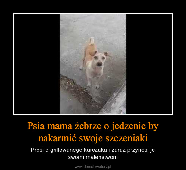 Psia mama żebrze o jedzenie by nakarmić swoje szczeniaki – Prosi o grillowanego kurczaka i zaraz przynosi jeswoim maleństwom