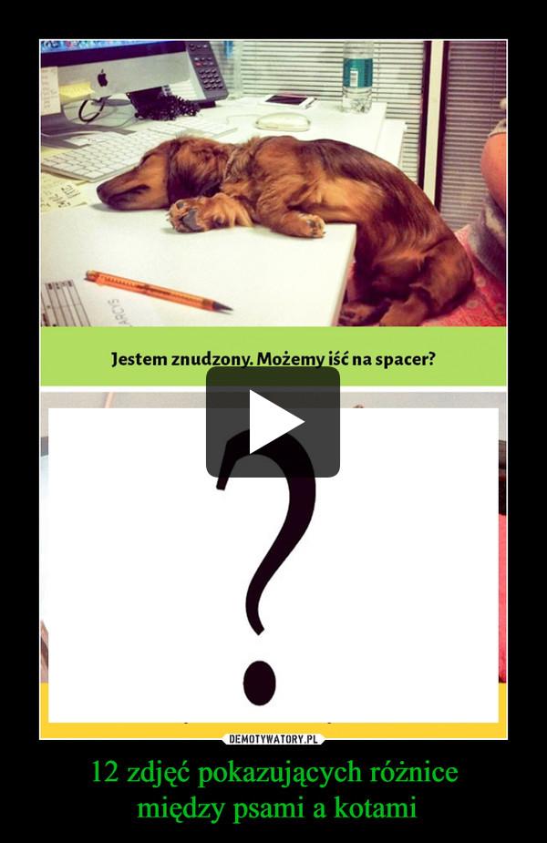 12 zdjęć pokazujących różnice między psami a kotami –