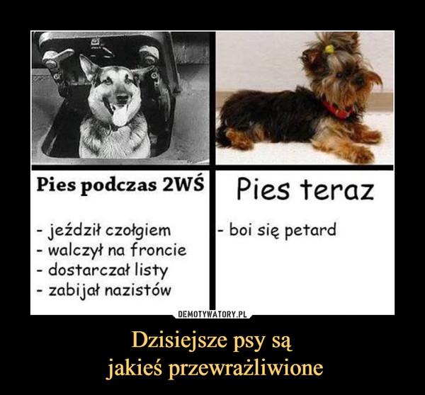 Dzisiejsze psy są jakieś przewrażliwione –
