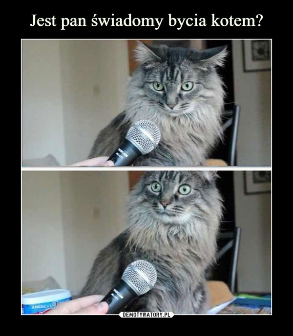 Jest pan świadomy bycia kotem?