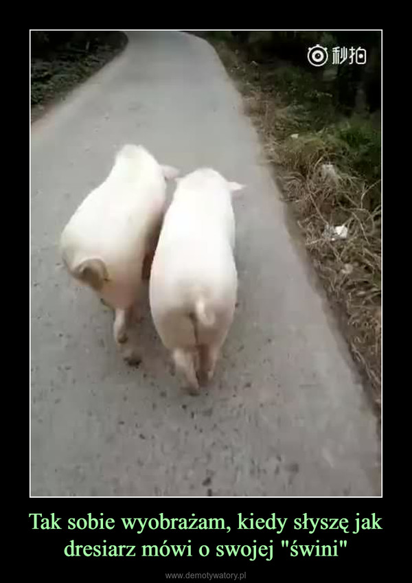 """Tak sobie wyobrażam, kiedy słyszę jak dresiarz mówi o swojej """"świni"""" –"""