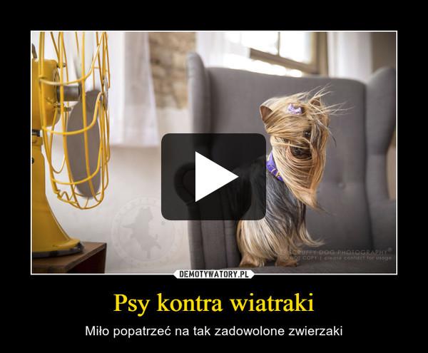 Psy kontra wiatraki – Miło popatrzeć na tak zadowolone zwierzaki