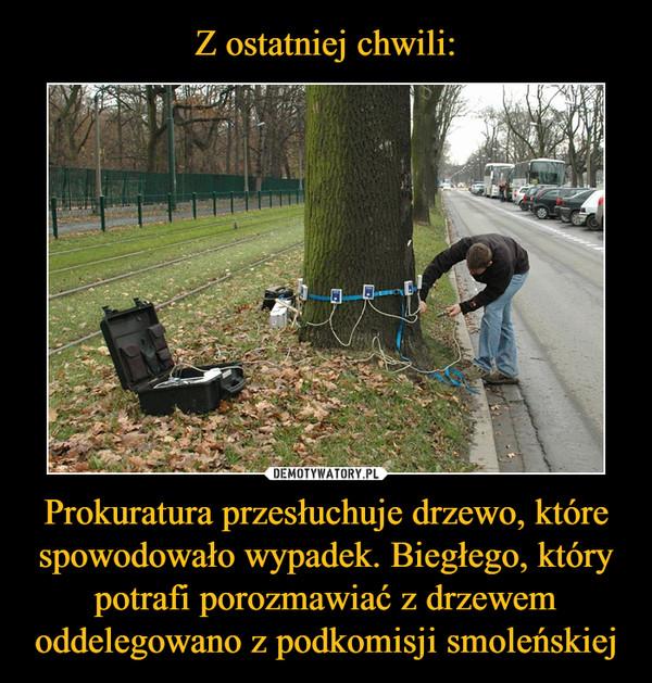 Prokuratura przesłuchuje drzewo, które spowodowało wypadek. Biegłego, który potrafi porozmawiać z drzewem oddelegowano z podkomisji smoleńskiej –