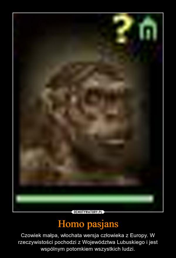Homo pasjans – Czowiek małpa, włochata wersja człowieka z Europy. W rzeczywistości pochodzi z Województwa Lubuskiego i jest wspólnym potomkiem wszystkich ludzi.