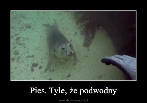 Pies. Tyle, że podwodny –