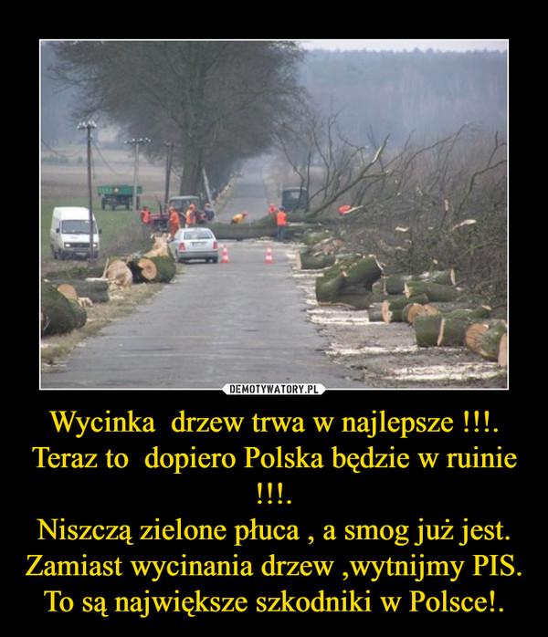 Wycinka  drzew trwa w najlepsze !!!.Teraz to  dopiero Polska będzie w ruinie !!!.Niszczą zielone płuca , a smog już jest.Zamiast wycinania drzew ,wytnijmy PIS.To są największe szkodniki w Polsce!. –