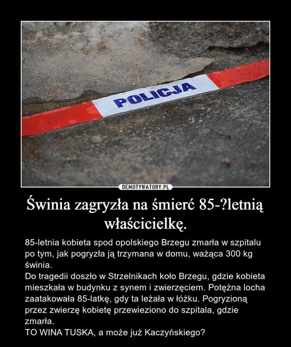 Świnia zagryzła na śmierć 85-letnią właścicielkę. – 85-letnia kobieta spod opolskiego Brzegu zmarła w szpitalu po tym, jak pogryzła ją trzymana w domu, ważąca 300 kg świnia.Do tragedii doszło w Strzelnikach koło Brzegu, gdzie kobieta mieszkała w budynku z synem i zwierzęciem. Potężna locha zaatakowała 85-latkę, gdy ta leżała w łóżku. Pogryzioną przez zwierzę kobietę przewieziono do szpitala, gdzie zmarła.TO WINA TUSKA, a może już Kaczyńskiego?