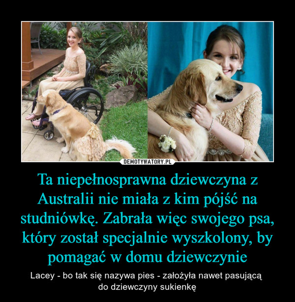 Ta niepełnosprawna dziewczyna z Australii nie miała z kim pójść na studniówkę. Zabrała więc swojego psa, który został specjalnie wyszkolony, by pomagać w domu dziewczynie – Lacey - bo tak się nazywa pies - założyła nawet pasującą do dziewczyny sukienkę