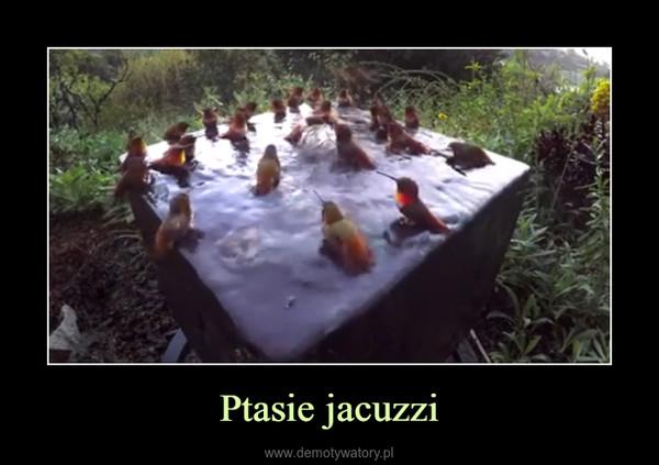 Ptasie jacuzzi –