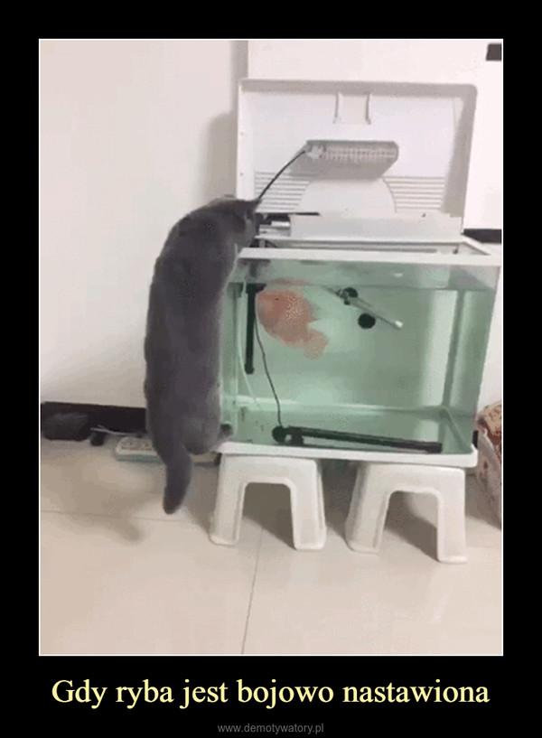 Gdy ryba jest bojowo nastawiona –