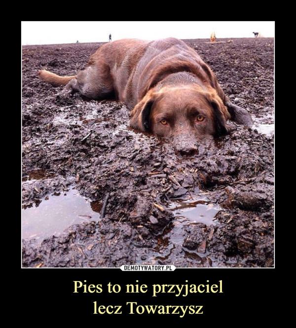 Pies to nie przyjaciellecz Towarzysz –