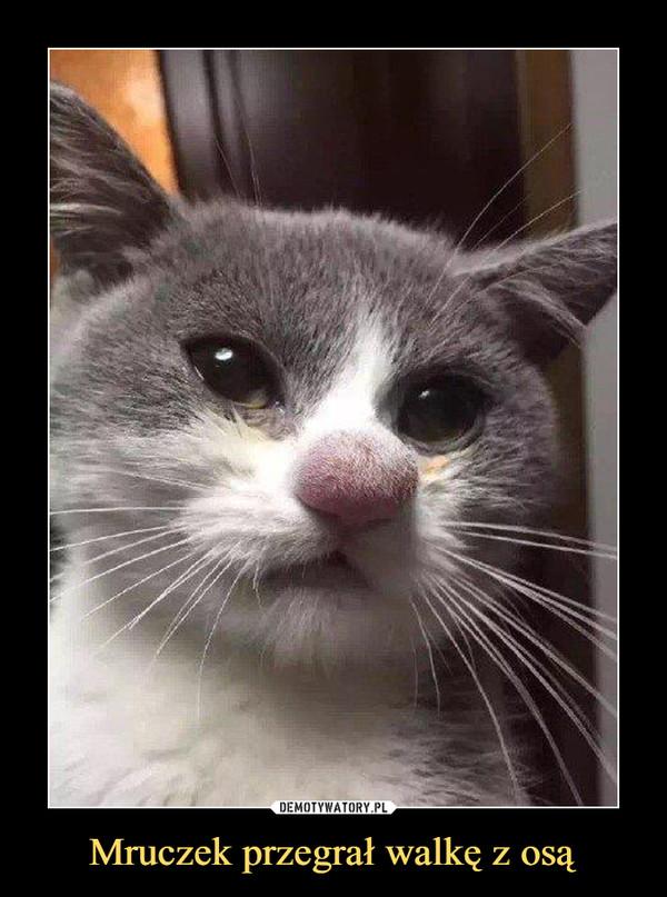 Mruczek przegrał walkę z osą –