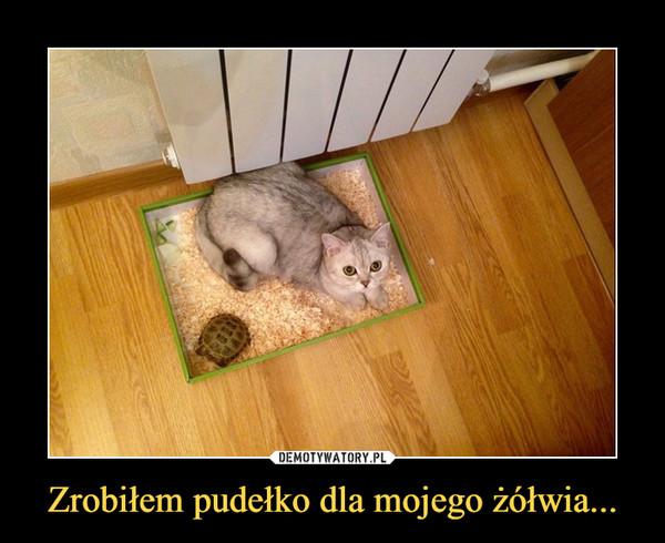 Zrobiłem pudełko dla mojego żółwia... –