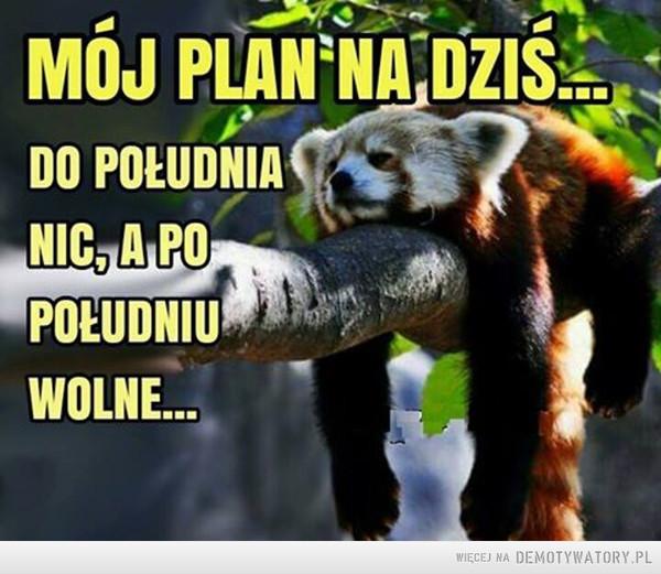 Plan na dziś –  MÓJ PLAN NA DZIŚ...DO POŁUDNIA NIC, A PO POŁUDNIU WOLNE...