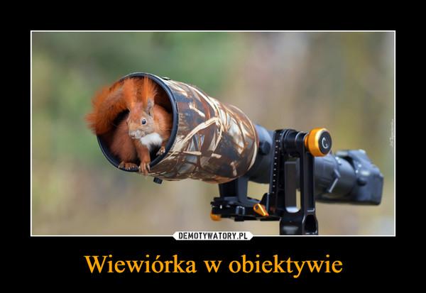 Wiewiórka w obiektywie –