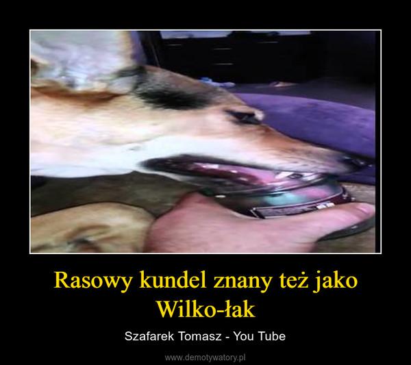 Rasowy kundel znany też jako Wilko-łak – Szafarek Tomasz - You Tube