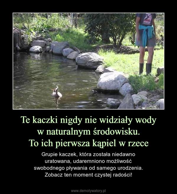 Te kaczki nigdy nie widziały wodyw naturalnym środowisku.To ich pierwsza kąpiel w rzece – Grupie kaczek, która została niedawnouratowana, udaremniono możliwośćswobodnego pływania od samego urodzenia.Zobacz ten moment czystej radości!