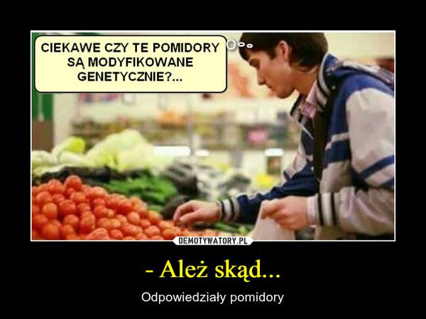 - Ależ skąd... – Odpowiedziały pomidory CIEKAWE CZY TE POMIDORYSĄ MODYFIKOWANEGENETYCZNIE?