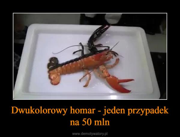 Dwukolorowy homar - jeden przypadek na 50 mln –
