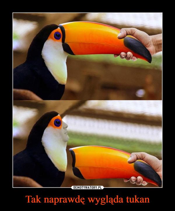 Tak naprawdę wygląda tukan –