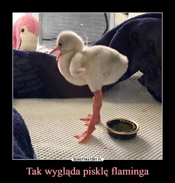 Tak wygląda pisklę flaminga –