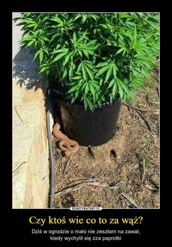 Czy ktoś wie co to za wąż? – Dziś w ogrodzie o mało nie zeszłam na zawał,kiedy wychylił się zza paprotki