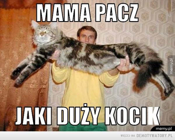Mama pacz jaki kocik – kubik stefan