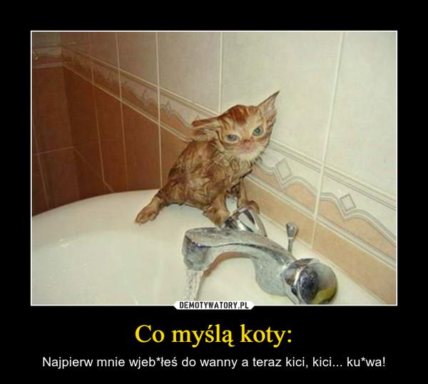 Co myślą koty: – Najpierw mnie wjeb*łeś do wanny a teraz kici, kici... ku*wa!