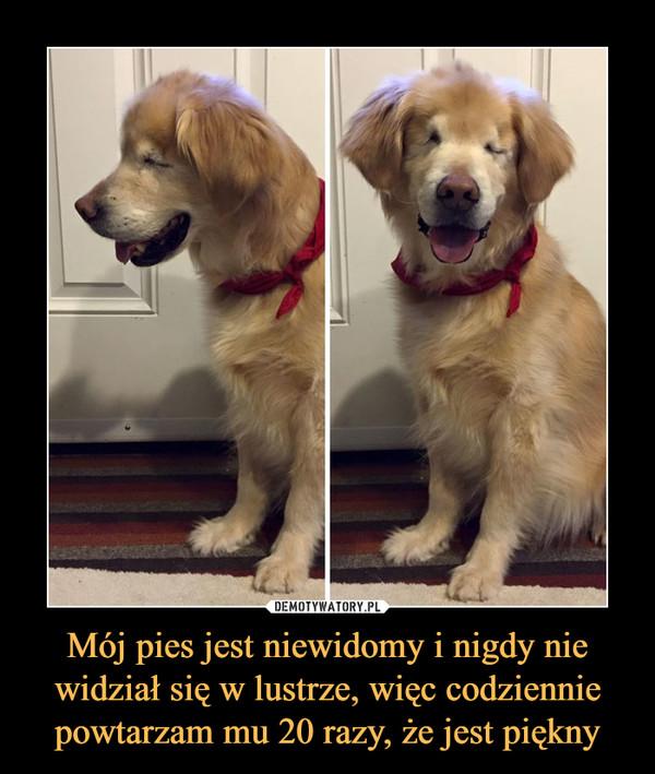 Mój pies jest niewidomy i nigdy nie widział się w lustrze, więc codziennie powtarzam mu 20 razy, że jest piękny –