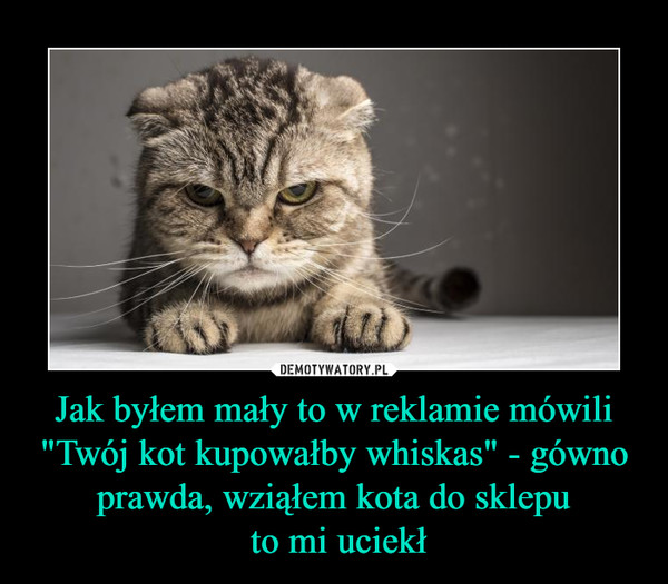 """Jak byłem mały to w reklamie mówili """"Twój kot kupowałby whiskas"""" - gówno prawda, wziąłem kota do sklepu to mi uciekł –"""