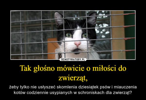 Tak głośno mówicie o miłości do zwierząt, – żeby tylko nie usłyszeć skomlenia dziesiątek psów i miauczenia kotów codziennie usypianych w schroniskach dla zwierząt?