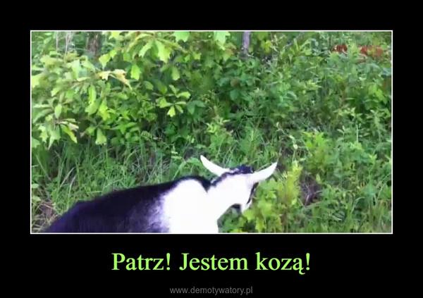 Patrz! Jestem kozą! –