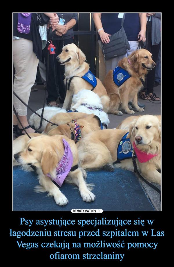 Psy asystujące specjalizujące się w łagodzeniu stresu przed szpitalem w Las Vegas czekają na możliwość pomocy ofiarom strzelaniny –