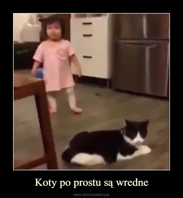 Koty po prostu są wredne –
