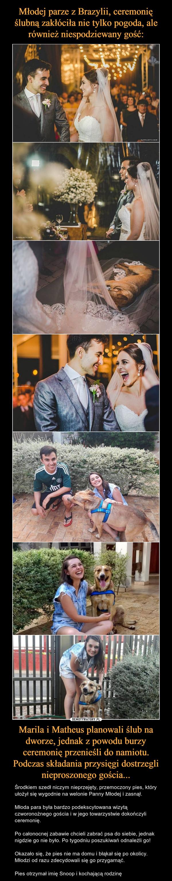 Marila i Matheus planowali ślub na dworze, jednak z powodu burzy ceremonię przenieśli do namiotu. Podczas składania przysięgi dostrzegli nieproszonego gościa... – Środkiem szedł niczym nieprzejęty, przemoczony pies, który ułożył się wygodnie na welonie Panny Młodej i zasnął.Młoda para była bardzo podekscytowana wizytą czworonożnego gościa i w jego towarzystwie dokończyli ceremonię.Po całonocnej zabawie chcieli zabrać psa do siebie, jednak nigdzie go nie było. Po tygodniu poszukiwań odnaleźli go! Okazało się, że pies nie ma domu i błąkał się po okolicy. Młodzi od razu zdecydowali się go przygarnąć.Pies otrzymał imię Snoop i kochającą rodzinę