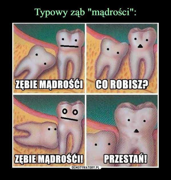 –  zębie mądrości co robisz?zębie mądrości! przestań!