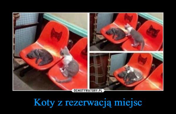 Koty z rezerwacją miejsc –