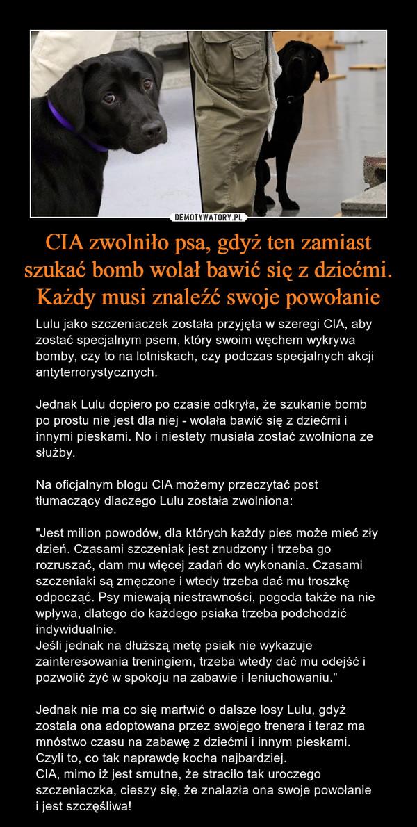 """CIA zwolniło psa, gdyż ten zamiast szukać bomb wolał bawić się z dziećmi. Każdy musi znaleźć swoje powołanie – Lulu jako szczeniaczek została przyjęta w szeregi CIA, aby zostać specjalnym psem, który swoim węchem wykrywa bomby, czy to na lotniskach, czy podczas specjalnych akcji antyterrorystycznych.Jednak Lulu dopiero po czasie odkryła, że szukanie bomb po prostu nie jest dla niej - wolała bawić się z dziećmi i innymi pieskami. No i niestety musiała zostać zwolniona ze służby.Na oficjalnym blogu CIA możemy przeczytać post tłumaczący dlaczego Lulu została zwolniona:""""Jest milion powodów, dla których każdy pies może mieć zły dzień. Czasami szczeniak jest znudzony i trzeba go rozruszać, dam mu więcej zadań do wykonania. Czasami szczeniaki są zmęczone i wtedy trzeba dać mu troszkę odpocząć. Psy miewają niestrawności, pogoda także na nie wpływa, dlatego do każdego psiaka trzeba podchodzić indywidualnie.Jeśli jednak na dłuższą metę psiak nie wykazuje zainteresowania treningiem, trzeba wtedy dać mu odejść i pozwolić żyć w spokoju na zabawie i leniuchowaniu.""""Jednak nie ma co się martwić o dalsze losy Lulu, gdyż została ona adoptowana przez swojego trenera i teraz ma mnóstwo czasu na zabawę z dziećmi i innym pieskami. Czyli to, co tak naprawdę kocha najbardziej.CIA, mimo iż jest smutne, że straciło tak uroczego szczeniaczka, cieszy się, że znalazła ona swoje powołanie i jest szczęśliwa!"""