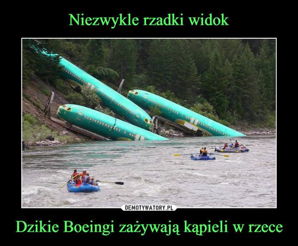 Dzikie Boeingi zażywają kąpieli w rzece –