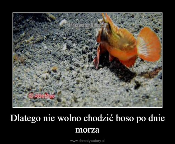 Dlatego nie wolno chodzić boso po dnie morza –